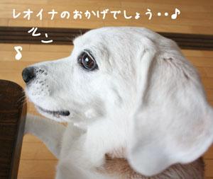 1_20080608211038.jpg