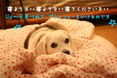 1_20080610230116.jpg