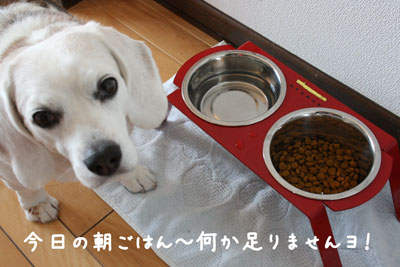 1_20080616110850.jpg