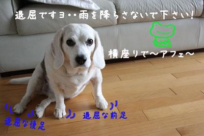 1_20080622154307.jpg