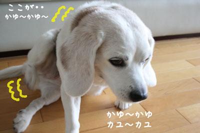 1_20080625120649.jpg