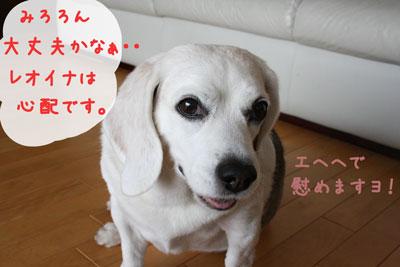1_20080627140449.jpg