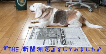 1_20080704115807.jpg