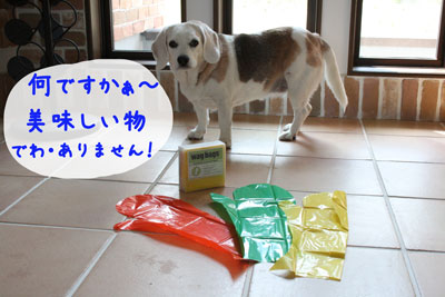 1_20080706154307.jpg
