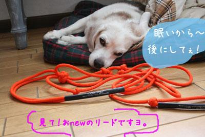 1_20080710152830.jpg