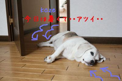 1_20080720134721.jpg