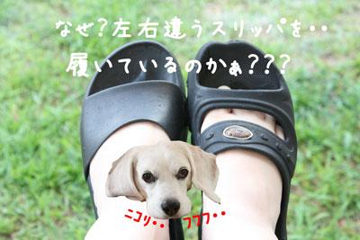 1_20080805000710.jpg