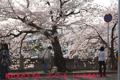 桜でクン・クン