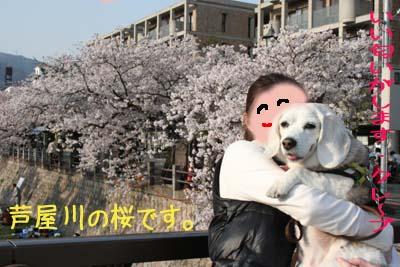 桜とクレープ