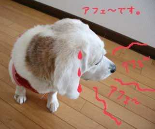 アフェ~犬