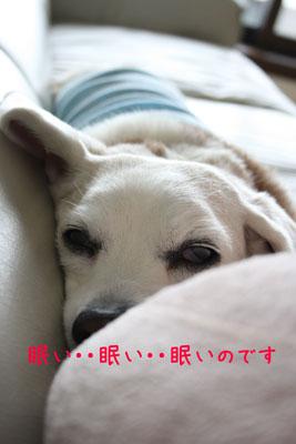 おやすみです