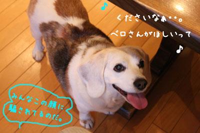 2_20080606221213.jpg