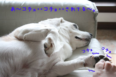 2_20080614210238.jpg
