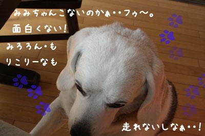 2_20080619232351.jpg