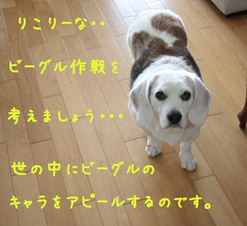 2_20080622154316.jpg
