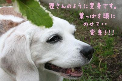 2_20080709150344.jpg