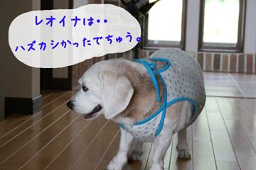 2_20080714095617.jpg