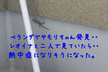 2_20080720134728.jpg