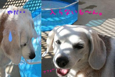 2_20080722231334.jpg