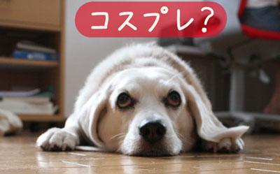 2_20080730144745.jpg