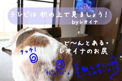 2_20080804124003.jpg