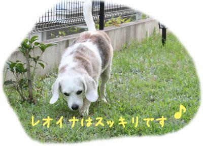 2_20080805000719.jpg