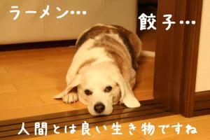 【おはぎ】略奪犬