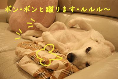 3_20080515204309.jpg