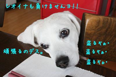 3_20080606221224.jpg
