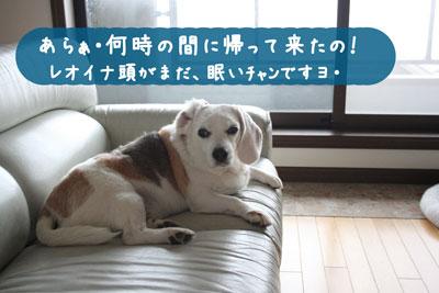 3_20080609140647.jpg