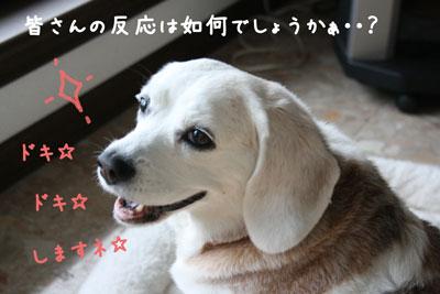 3_20080622154325.jpg