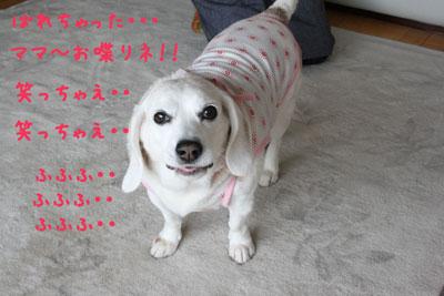 3_20080625120702.jpg