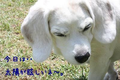 3_20080703160631.jpg