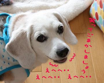 3_20080714095623.jpg
