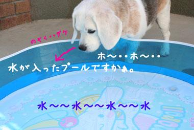 3_20080722231342.jpg