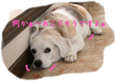 3_20080804124017.jpg