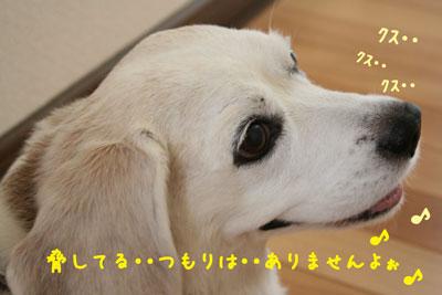 3_20080811145143.jpg