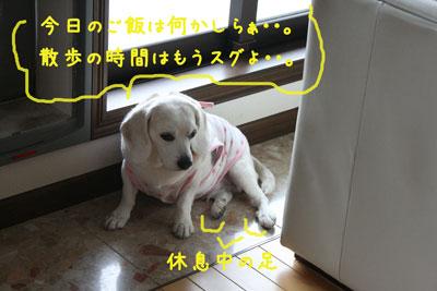4_20080529162036.jpg