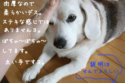 4_20080531223416.jpg