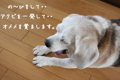 4_20080626211225.jpg