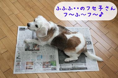 4_20080704115829.jpg