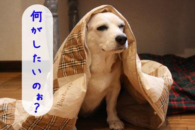 4_20080715222438.jpg