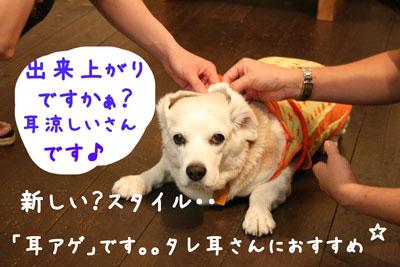 4_20080717185117.jpg