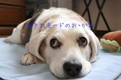 4_20080720134740.jpg