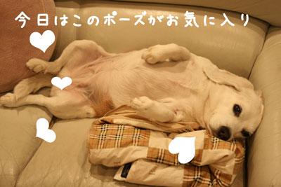 5_20080515204329.jpg