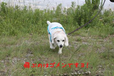 5_20080601212951.jpg