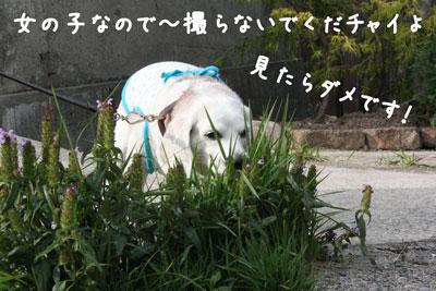 5_20080604212016.jpg