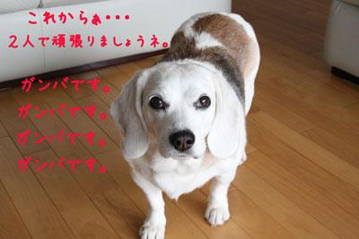 5_20080606223649.jpg