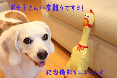 5_20080611213425.jpg