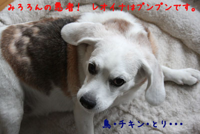 5_20080622013101.jpg